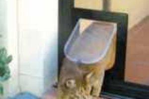 cat accessing pet flap in door