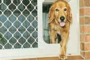 dog accessing pet flap in door