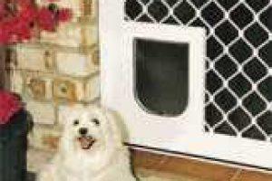 dog by pet door